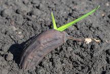 tohumlar fideler