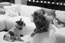Cachorros / Dogs Wedding