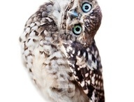 Green-owl-inspiration