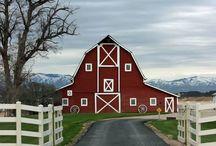 My farm / by Kelsey Horton