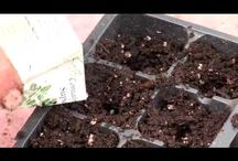 Start Plants from Seed