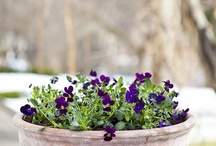 Container Gardening / Ideas for and tips about growing edibles and ornamentals in containers
