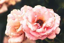 Garden / by Tiffani Clausing