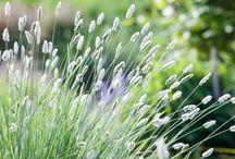 Grasses (2)