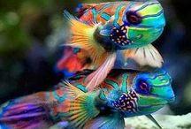As mais belas criaturas de Deus