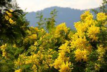 JAUNE... chambres d'hôtes & gîtes Fleurs de Soleil France / Nulle couleur n'est plus joyeuse que le jaune. Couleur du soleil, de la fête et de la joie, elle permet d'égayer un univers et de le faire rayonner....