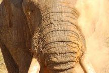 Conservation News on MyLowveld