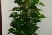 plantas de jardín