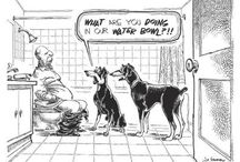 Animal Funnies / by All God's Creatures Pet Services