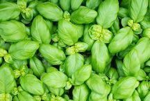 Værd at vide om urter