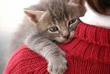 Katzen Erziehung und Bilder