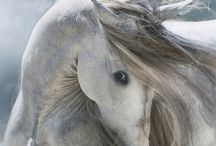 Cai / Horses