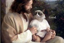GRUMPY CAT / I just love this cat and I hope you do too! FInd grumpy cats pics and memes on this pinterest board. Have fun!