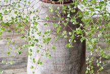 Fleurs potées arbres et jardins