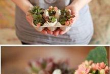About succulents....