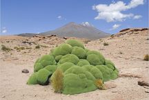 Argentin növény - Plants of Argentina