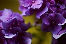Purple / by Mary Burnette-Robison