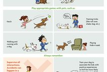 Dog education
