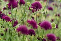 Snijbloemen voor in tuin