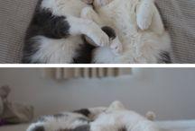 Awww--Cute Things / by Allyson Cora