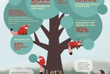 Red Panda Infographics / Red panda facts, stats and figures! Enjoy!