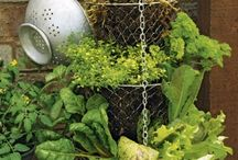 Gardening / by Julie Hail Dillon