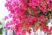 Blomster og haven