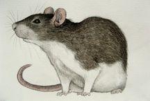 Potkani kresba