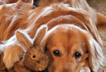 Super søte dyr / På denne tavlen er det forskjellige dyr blant annet: Katter, Hunder, Sauer, Pigsvin, skilpadder og Kaniner! PS: De er super søte!!!!