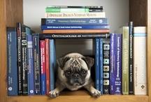 Books Worth Reading / by Katelyn Molloy