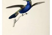 Illustrator Birds & Butterfly Inspiration