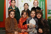 Doğa Okulları Acıbadem Kampüsü 2016 World Cats Show