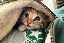 kitten, cat,  cute <3