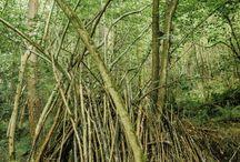 Irish woods
