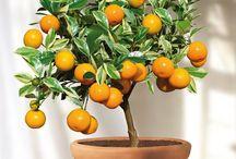 On adopte un arbre fruitier nain
