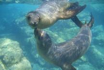 Sea Lions in La Paz / by Visit Baja California Sur