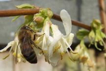 Bee Watch / Our resident Bee Keeper and Expert, Stewart Gould shares his tips on keeping our gardens Bee-friendly.