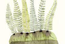 botanicals  / by Elizabeth's Flowers