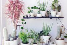Green / Planter