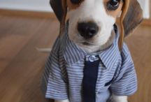Beagles / The cutest Beagle dogs within the Feature My Pet community, and elegant Beagle themed jewelry.