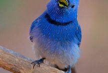 BIRDS / Pássaros de todos tipos e cores