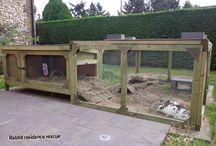 Rabbit homes