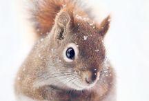 zvířátka v zimě