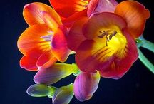 festészetre II. flowers