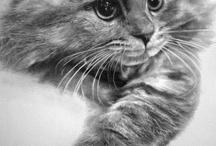 tegninger av katt