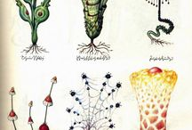 Codex Serpahinianus
