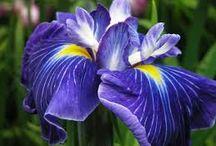Flowering Perennial Favorites