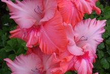 Virágok, melyek tetszenek