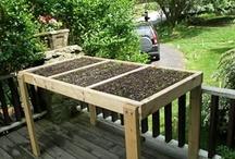 Gardening 2 / by Garden Crazzy