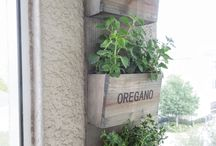 Gardening idea's